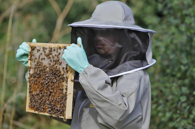 Will beekeepers be allowed to site hives on a Darlington park?