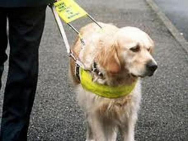 Guide dogs can be a lifeline for their owners
