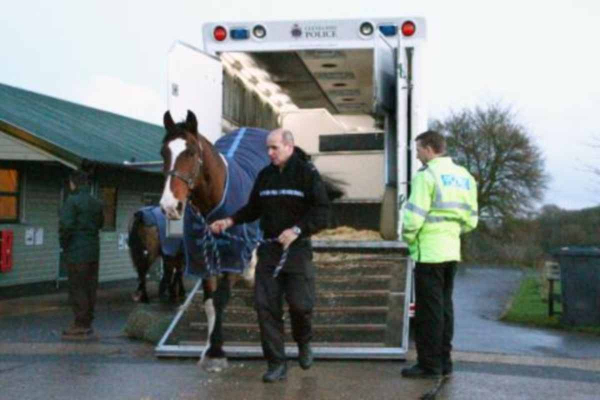 Horses from disbanded mounted section taken to their new home