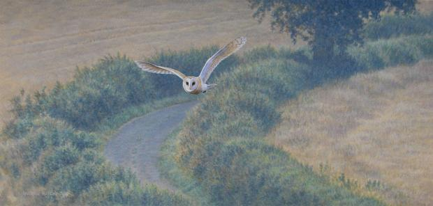 Owl by artist Andrew Hutchinson; one of the paintings that is on display this month at the Inspired by....gallery