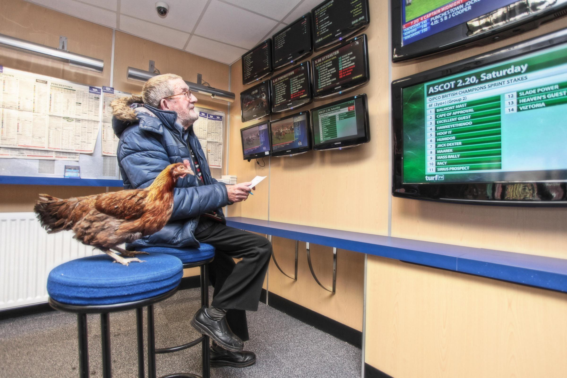 SPRING CHICKEN: Alan Richards enjoys a trip to the bookies with his feathered friend