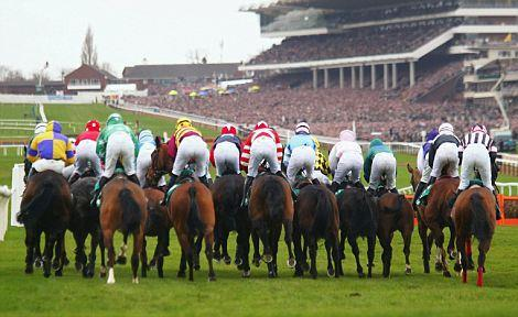 FESTIVAL FANCIES: The biggest week of the National Hunt calendar gets under way on Tuesday when the Cheltenham Festival begins