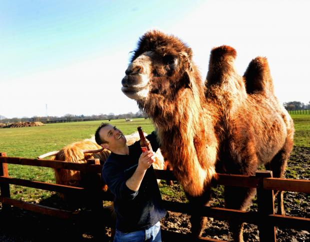 Jeffrey the camel with owner Simon Griffiths