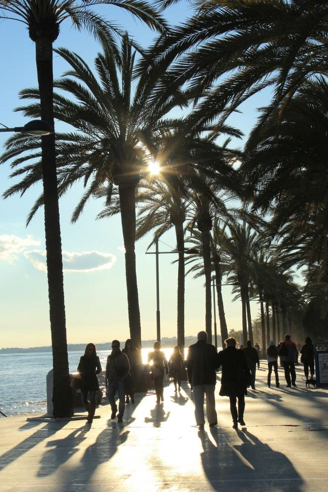 Sunny stroll: palm trees on the Marbella seafront