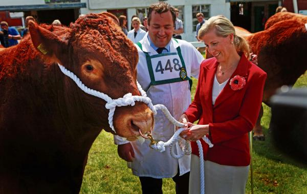Bright outlook as Great Yorkshire Show gets underway
