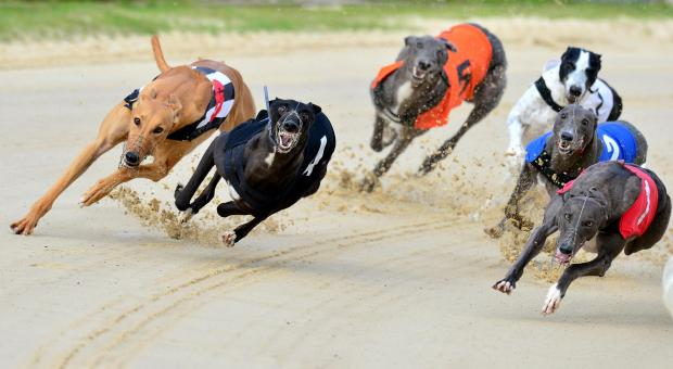 BIG NIGHT: The William Hill Classic is the main attraction on a big night of greyhound racing at Sunderland