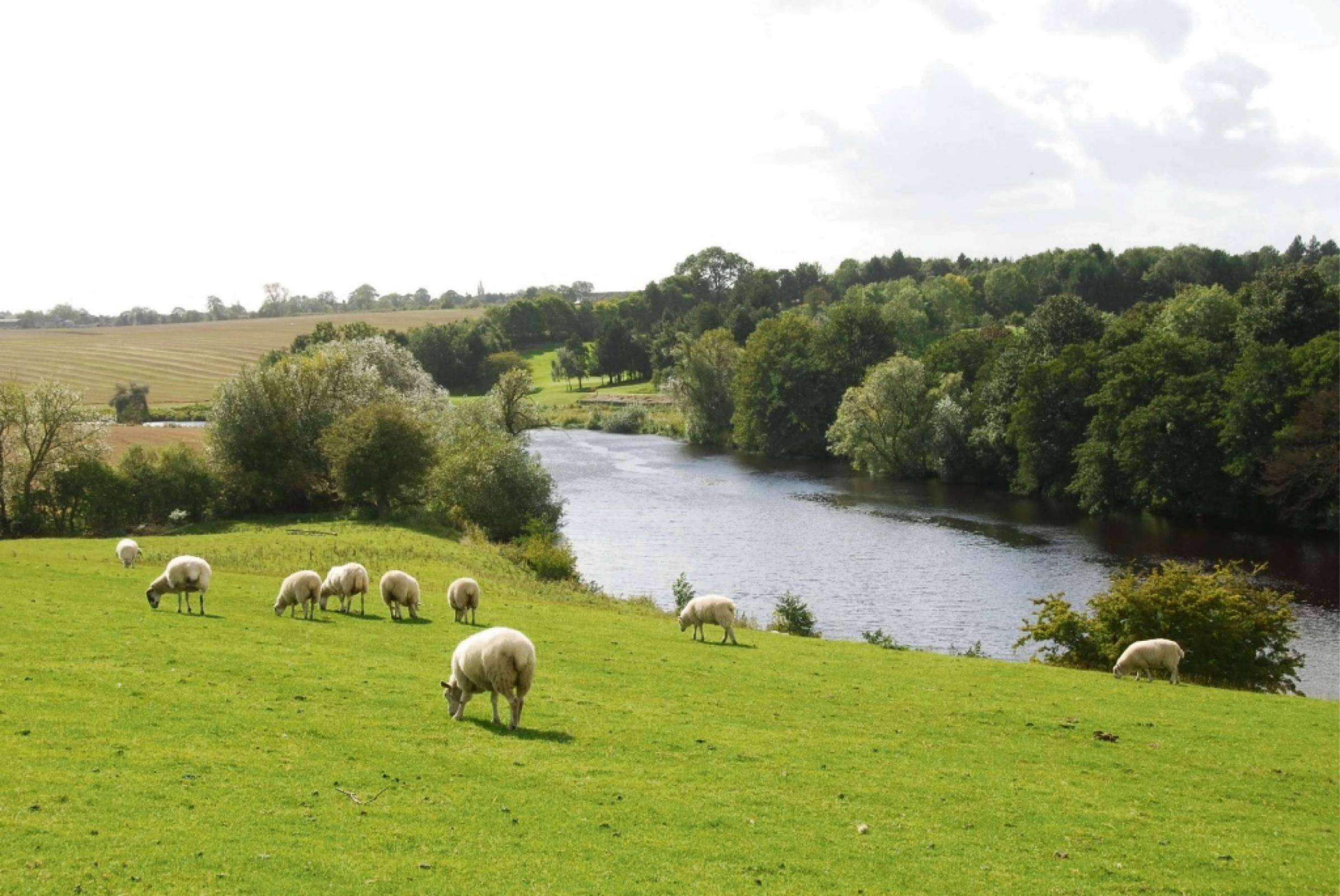 Cash flows for River Tees project