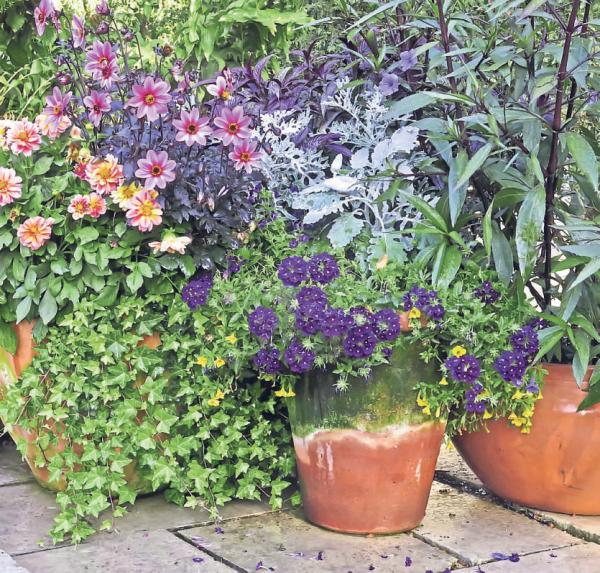 PATIO PLEASERS: A vibrant garden display
