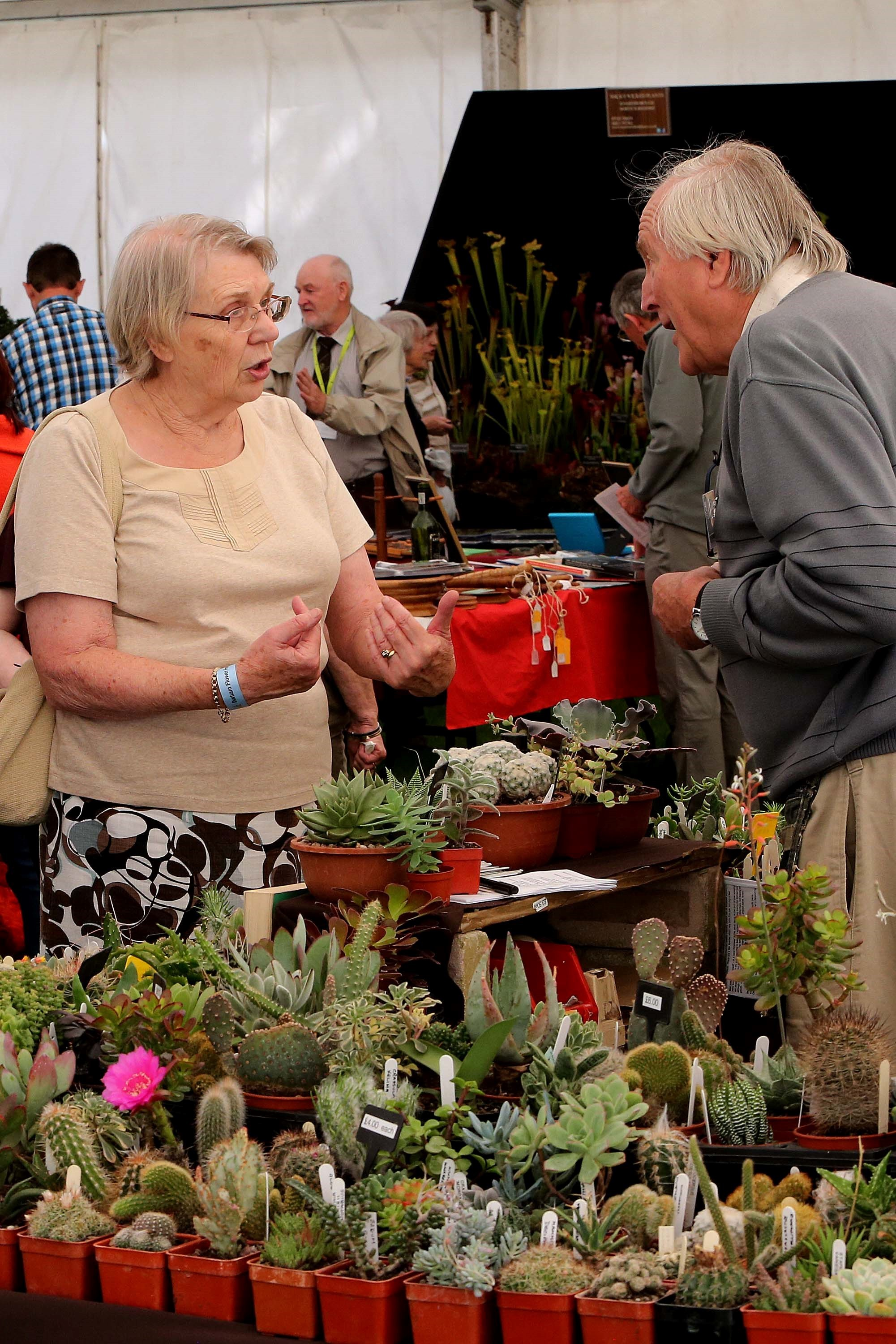 Flower show in Durham City is blooming marvellous