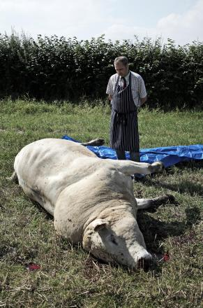 BILLY BULL: Philip Marley with his bull lying where it was shot by police. Picture: STUART BOULTON.