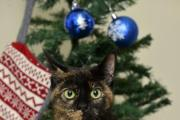 HOMELESS PETS: Trudie at the Thirsk rehoming centre