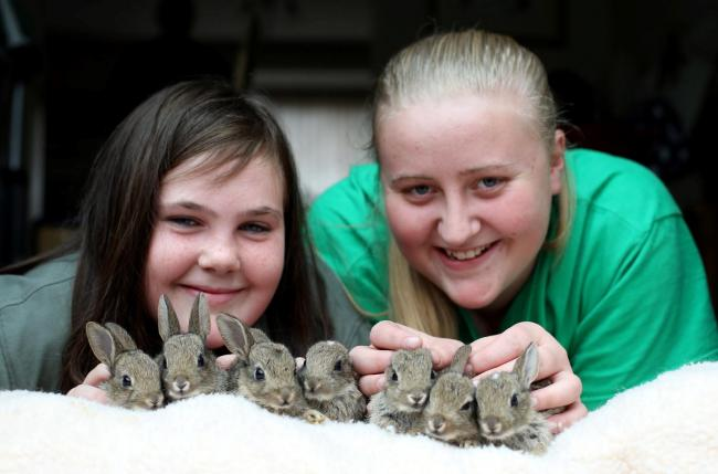 LUCKY SEVEN: Bunny Burrows in Richmond have rescued baby rabbits from the A1 roadworks. Erin Hutchinson (11) and Rhianna Bromley (16) with the rabbits. Picture: CHRIS BOOTH