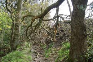 Fines for farmer who cut down trees in ancient woodland