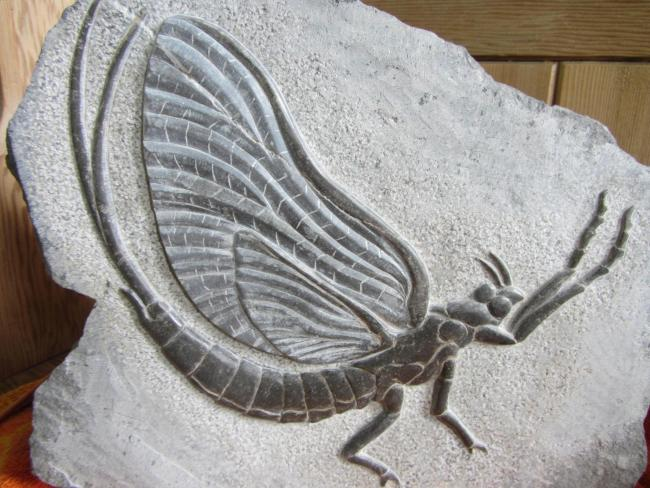 STOLEN: The mayfly stone carving was stolen sometime between September 8 and 10