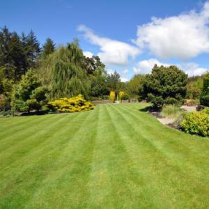The Northern Echo: How to get the perfect summer lawn