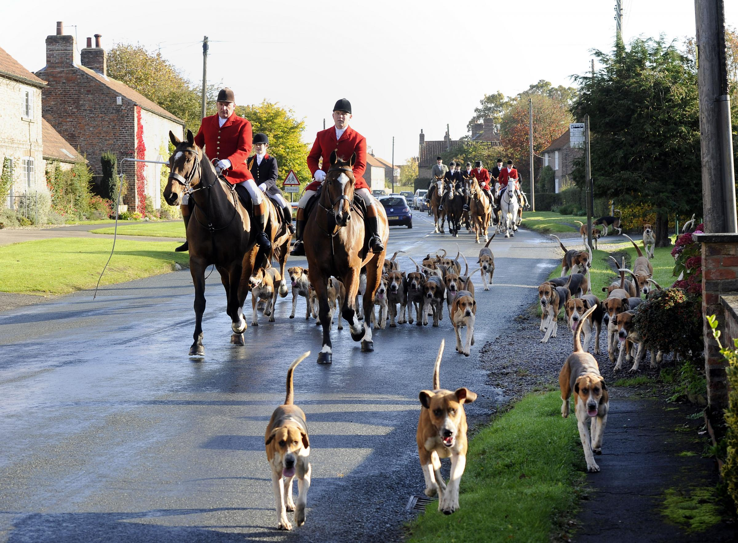 HUNT: Politicians have welcomed news that a free vote to repeal fox hunting restriction has been shelved. Pictured are members of the York and Ainsty Hunt, in North Yorkshire, on a hunt Picture: PA WIRE