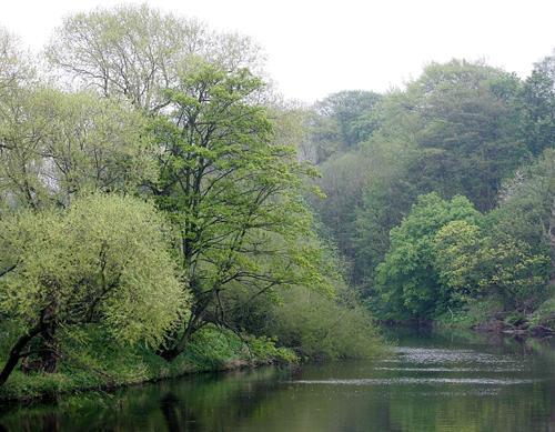 The Northern Echo: TRANQUIL: A view of the River Tees at Worsall looking towards Yarm