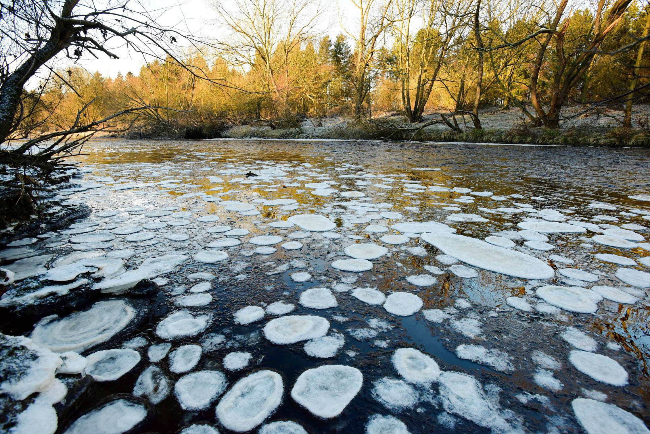Ice pancakes on the River Tees. Picture: NORTH NEWS
