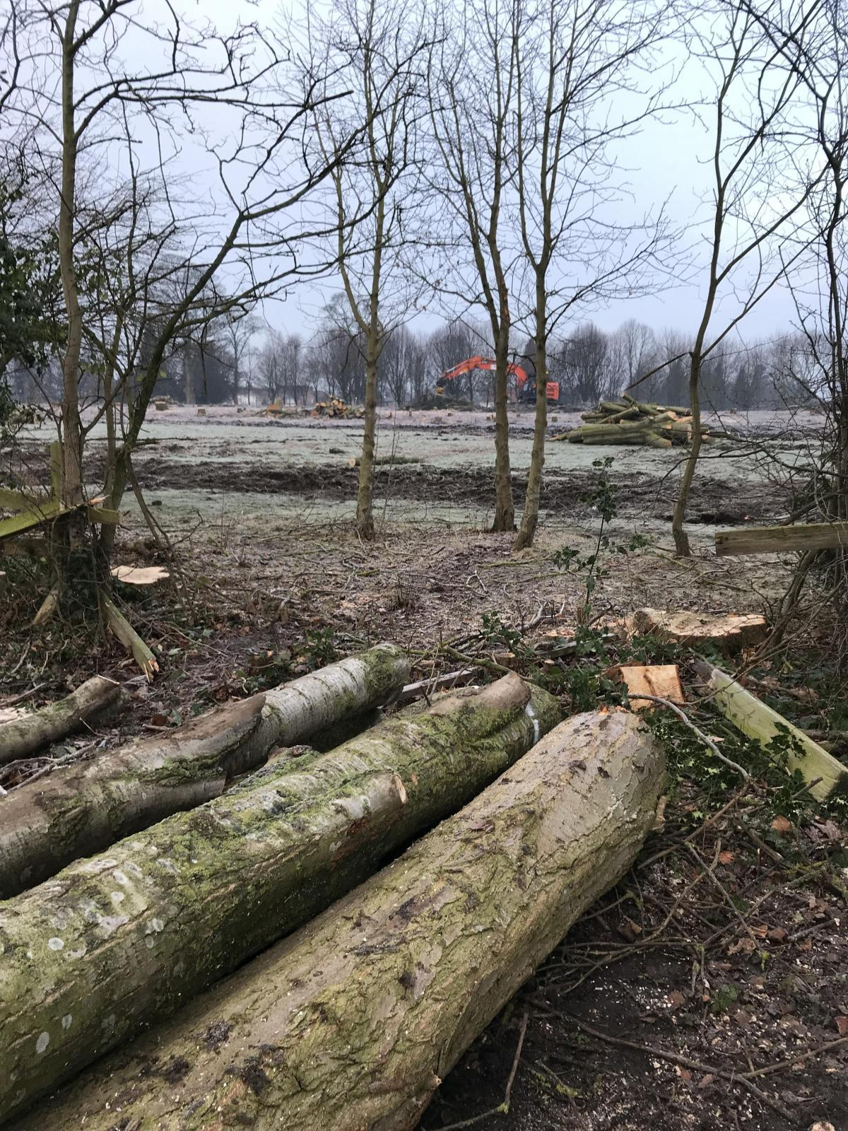 TREES: Dozens, possibly hundreds, of trees have been felled in the Blackwell area, much to the horror of residents