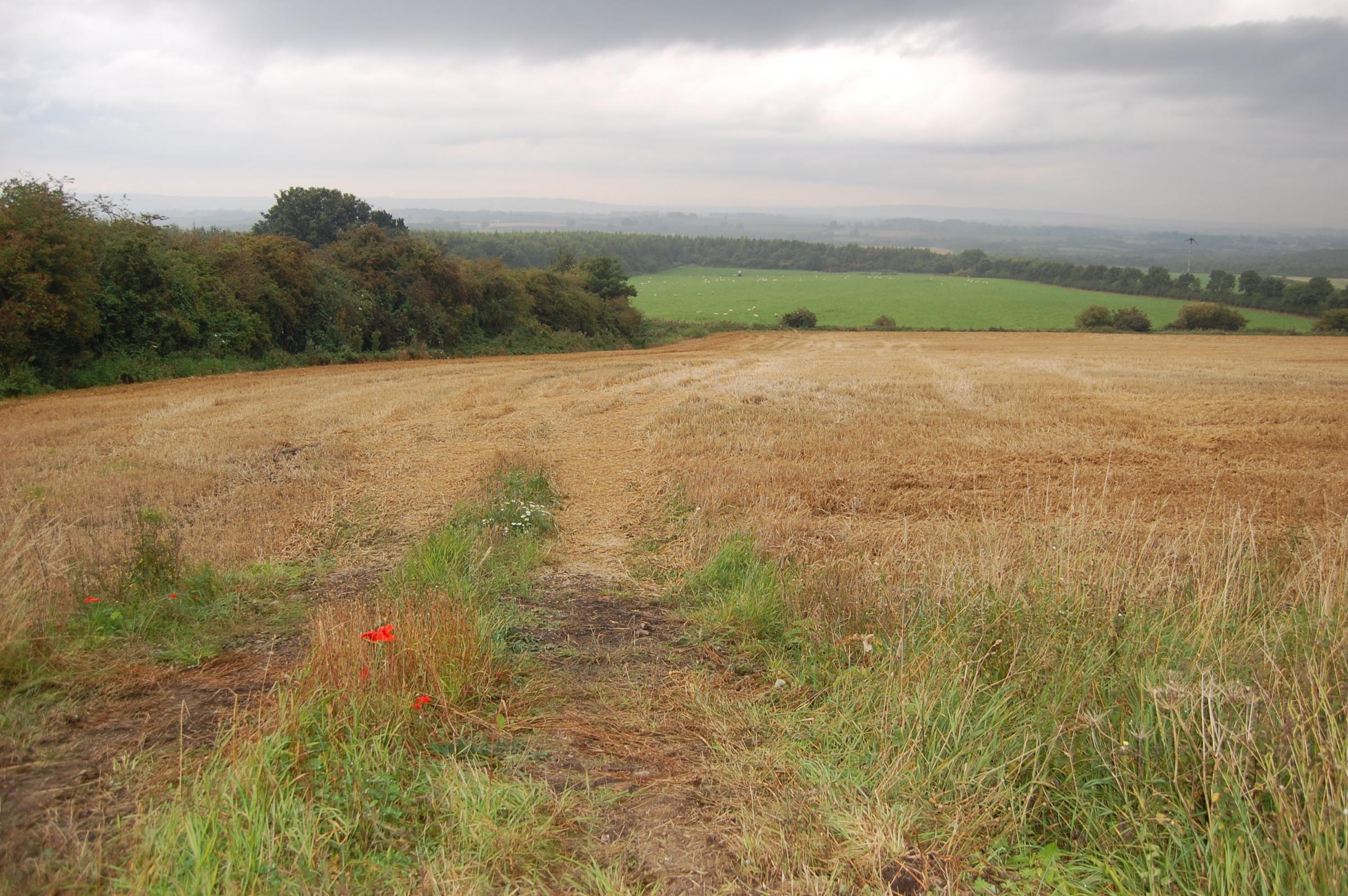 Avant homes wants to build around 70 homes on this land, to the north of Benridge Bank in West Rainton.