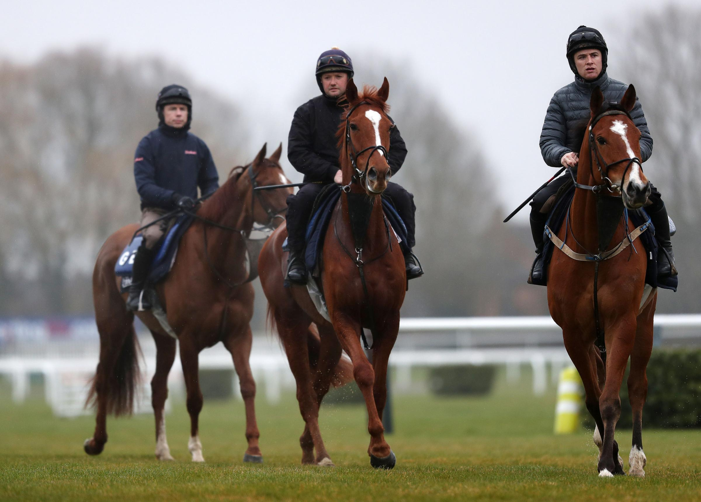 Samcro (centre) on the gallops during a preview day ahead of the  Cheltenham Festival