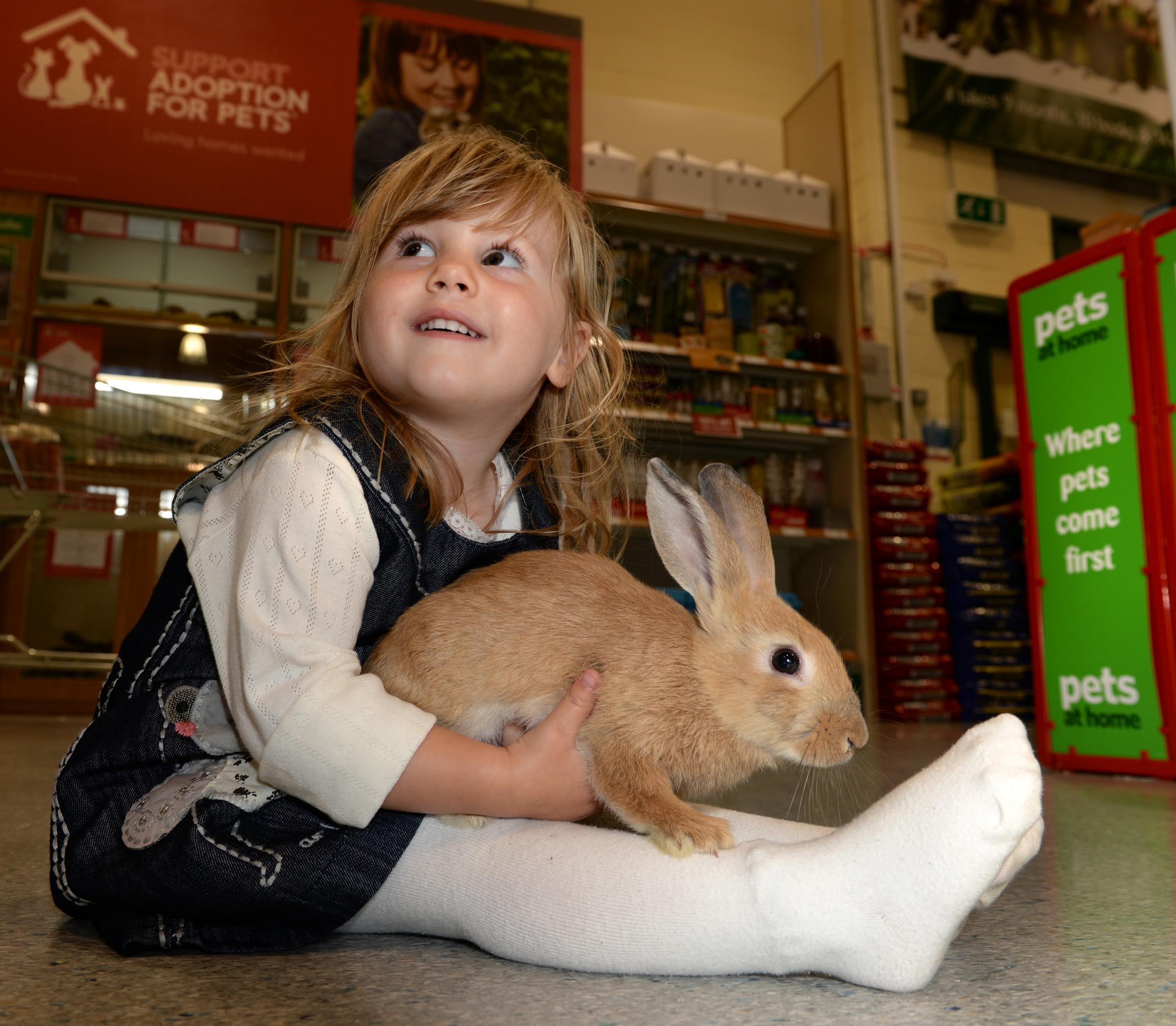 No Rabbits This Easter Pets At Homes Bans Bunny Sales Again The Northern Echo