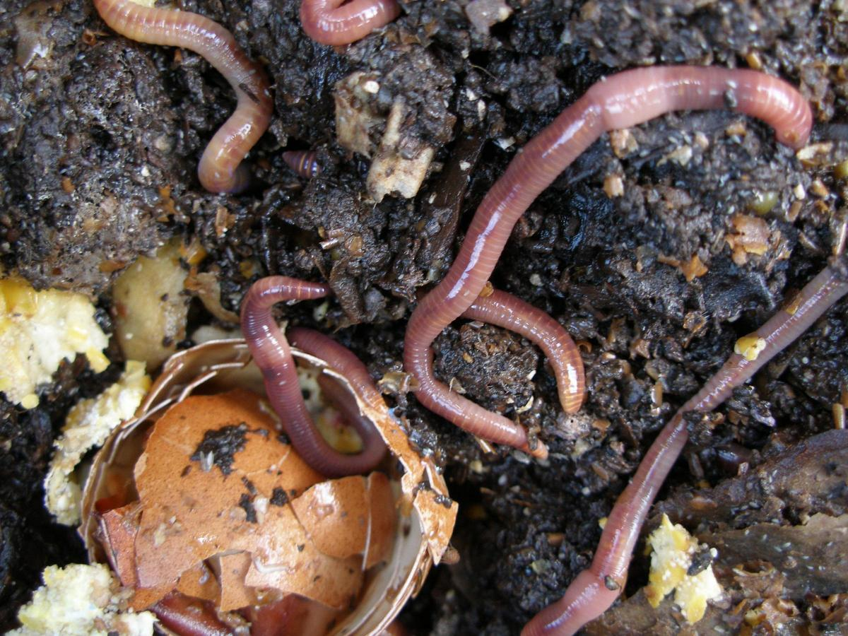 All You Need To Know About Worms And Why Your Garden Needs Them
