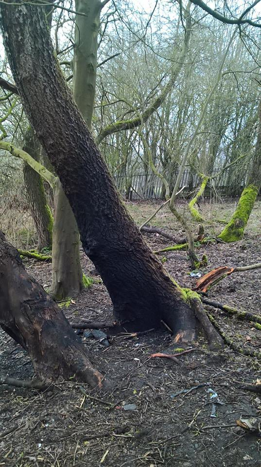 DAMAGED: Trees have been set alight behind Parkside Academy in Willington Picture: DURHAM POLICE