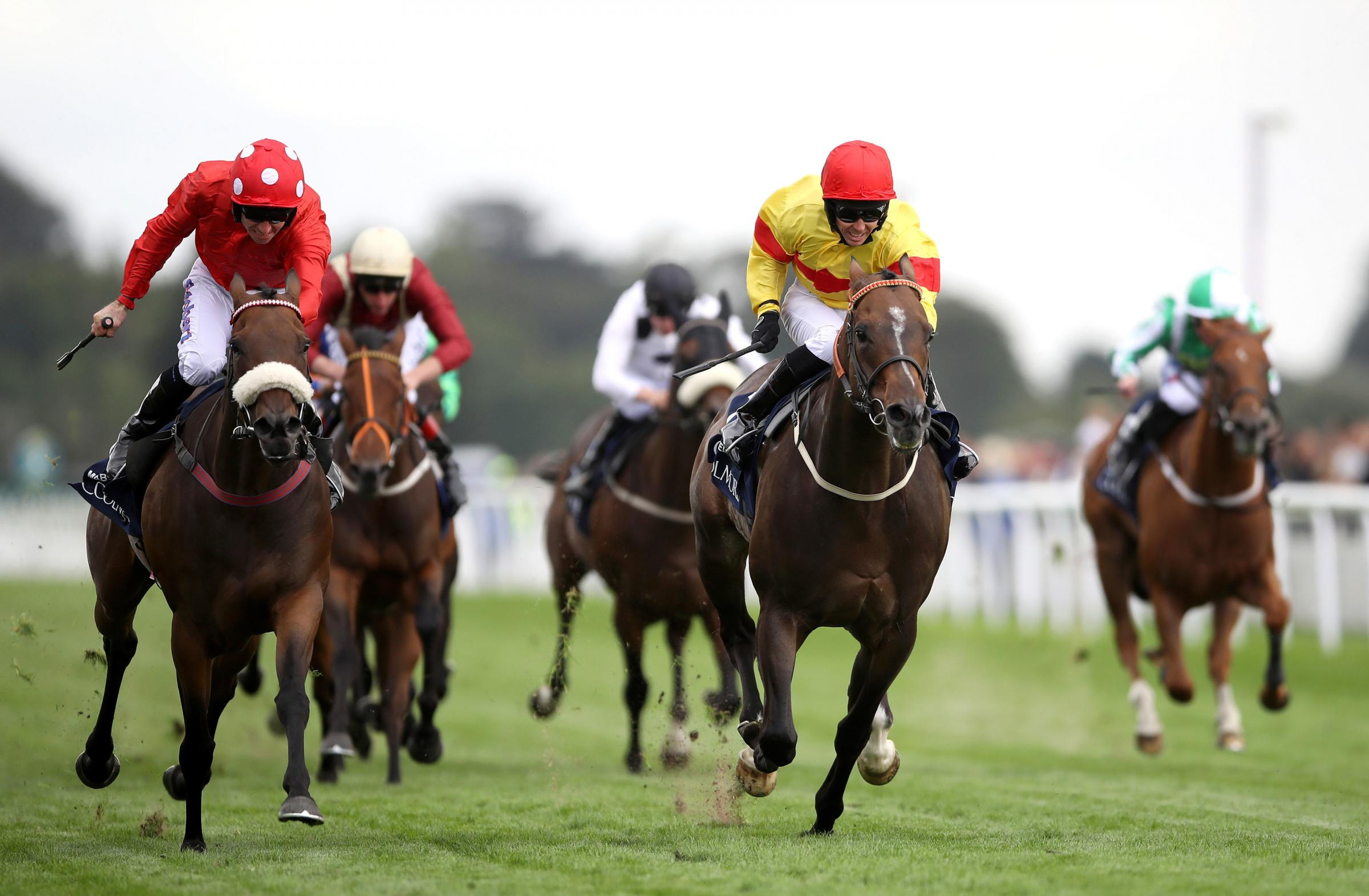 SO CLOSE: Alpha Delphini (right) and Mabs Cross (left) battle out a thrilling finish to August's Nunthorpe Stakes at York
