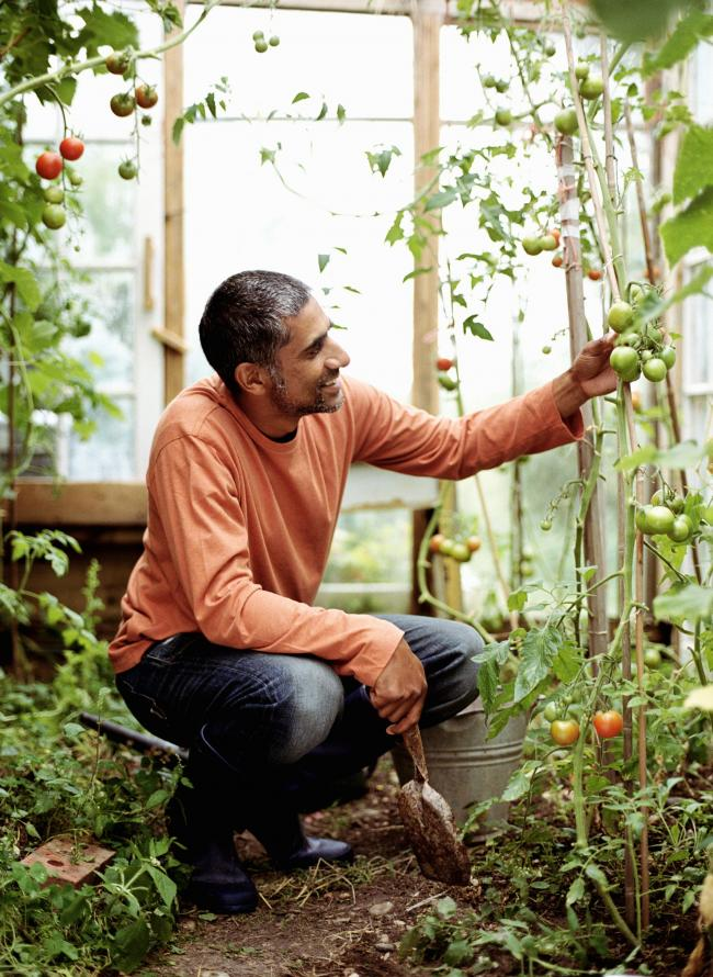 A generic photo of a happy gentleman in the greenhouse, squeezing his tomatoes. See PA Feature GARDENING Summer. Picture credit should read: PA Photo/thinkstockphotos. WARNING: This picture must only be used to accompany PA Feature GARDENING Summer