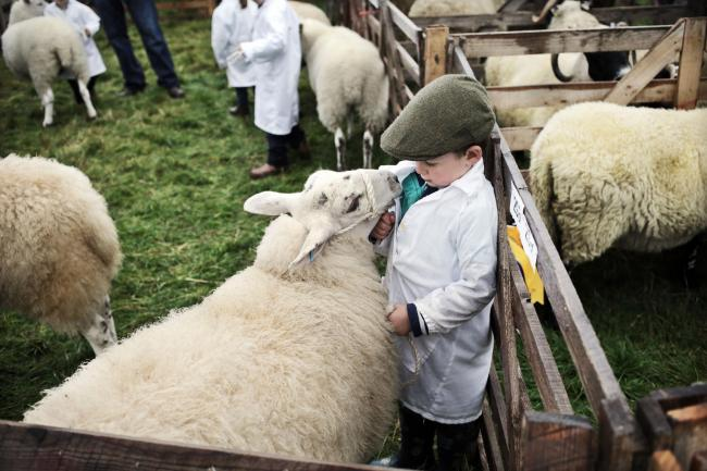 STOKESLEY SHOW: 3 year old Harry Hall's sheep has a quiet word during the build up to the pet lamb class. Picture: STUART BOULTON..