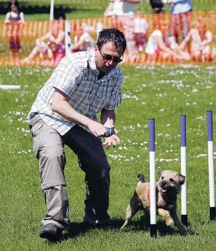 Lead role for labradoodles | The Northern Echo
