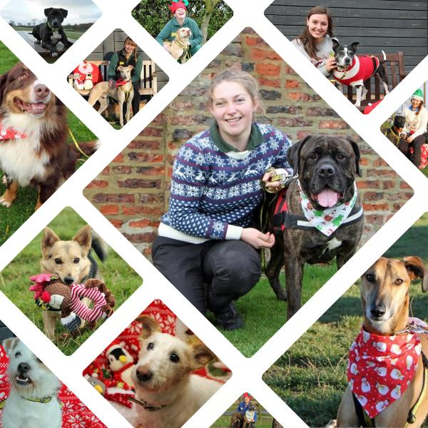 12 Dogs Of Christmas.Darlington S 12 Dogs Of Christmas Looking For New Homes In