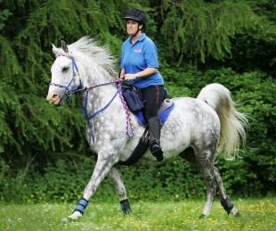 SADDLE SOAR: Karen David, who is organising an endurance riding event in, Hamsterley Forest, rides on Al Zahi Khazan