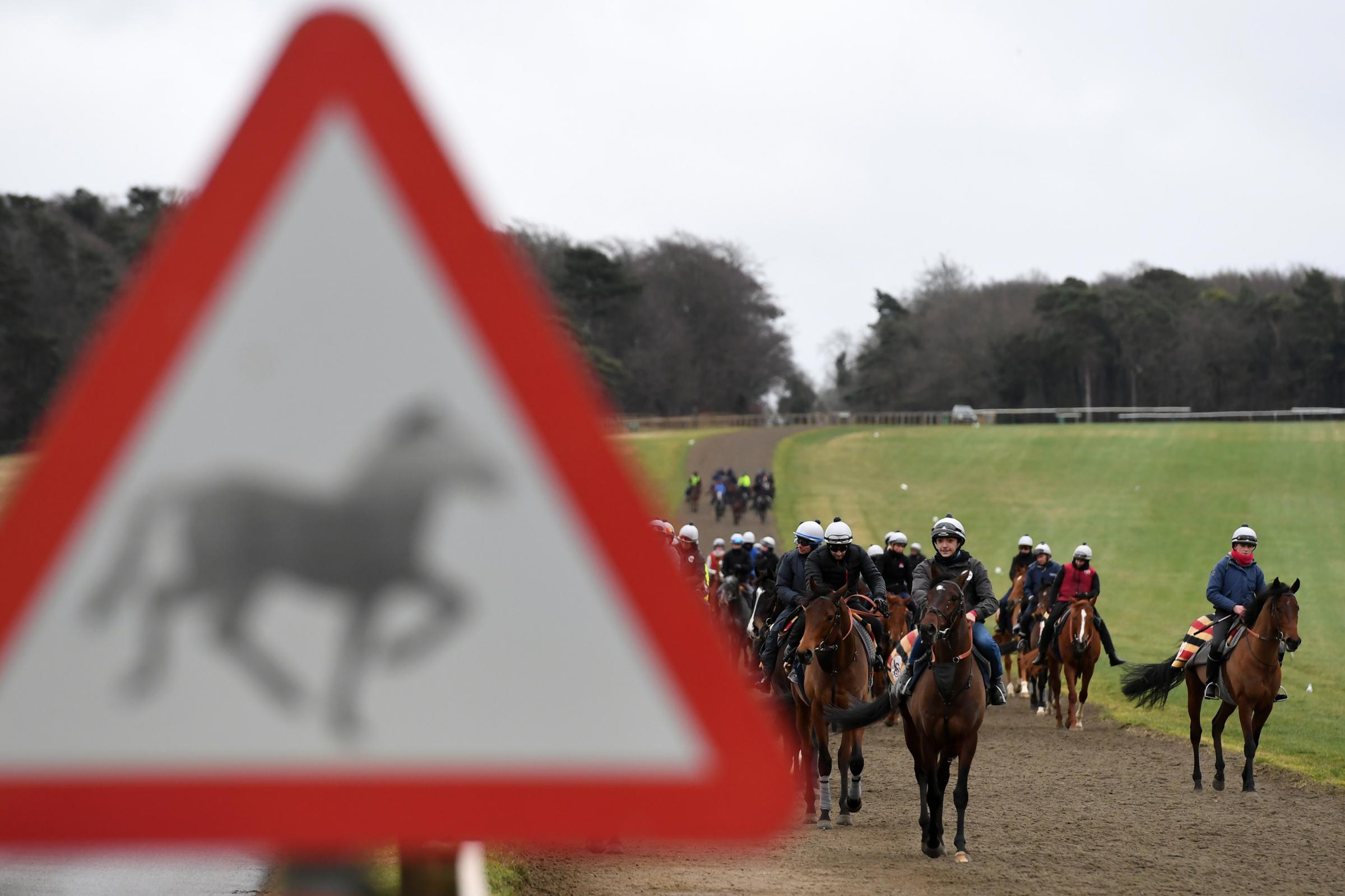 Horses on the gallops in Newmarket..