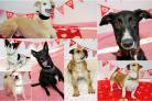 Dogs in Dogs Trust Darlington looking for a second chance at love this Valentine's Day