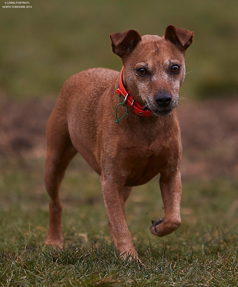 Sadly Lucky has uncurable cancer but is a happy dog who needs a home