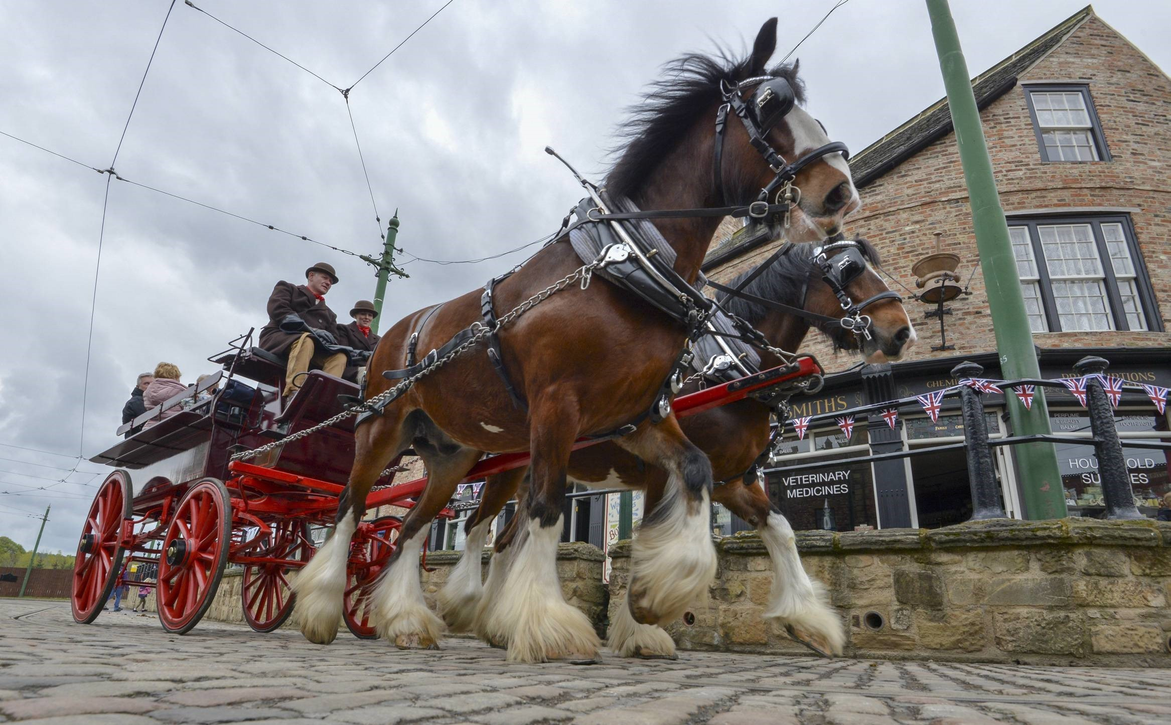 WORKING HORSES: The horses at Beamish Museum Picture: NORTH NEWS AND PICTURES LTD