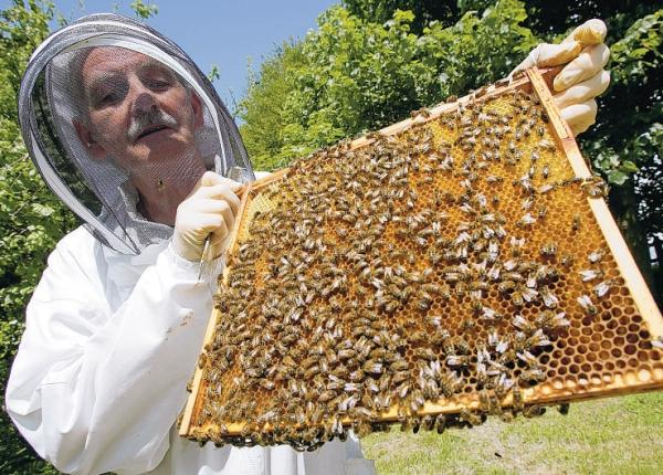Beekeeping has grown in popularity since the plight of Britain's dwindling bee populations was highligted