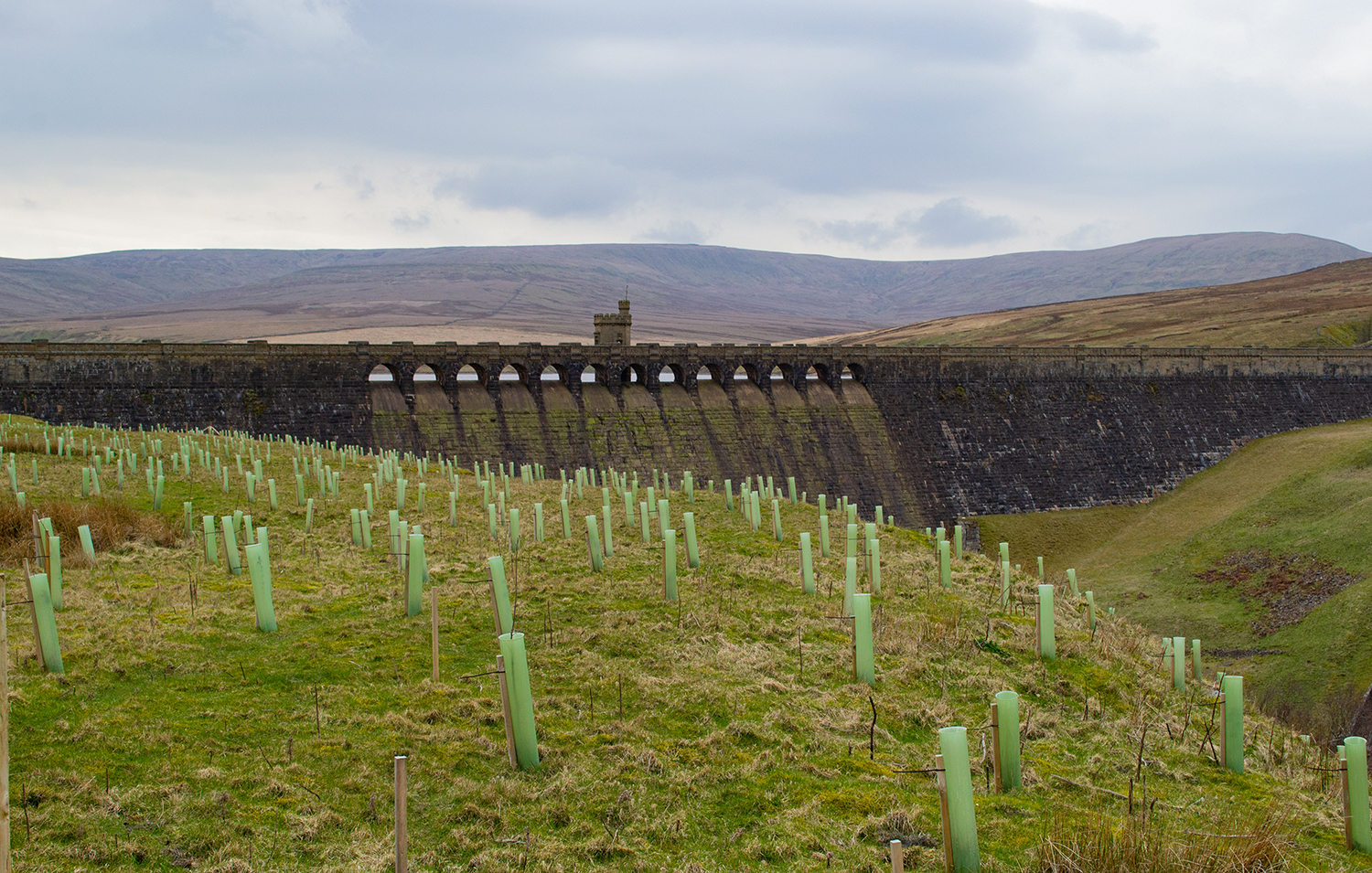 Planting trees in the Yorkshire Dales