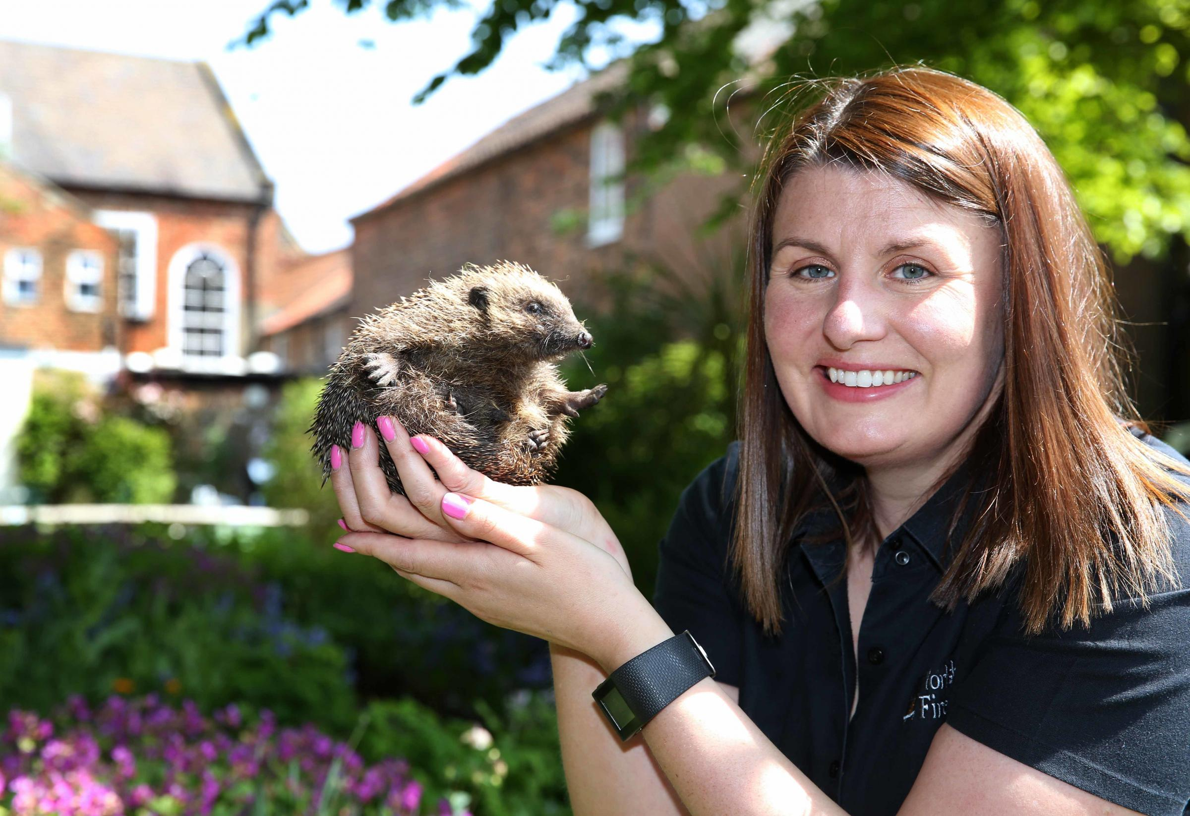 "Sarah Livesley with ""Tich"" the disabled hedgehog which has a new home in the garden at the back of her business in Northallerton.  Picture: Richard Doughty Photography"