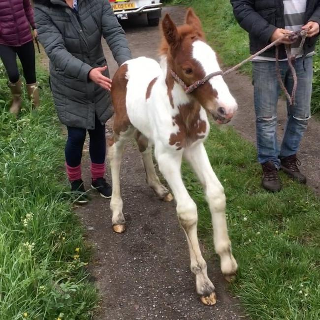 The foal was rescued by the fire service