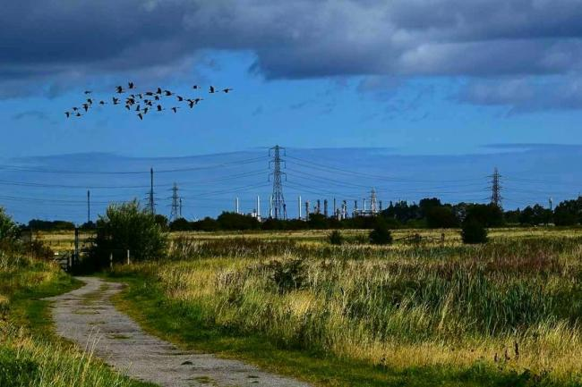 Rallying call for wildlife survey at RSPB Saltholme