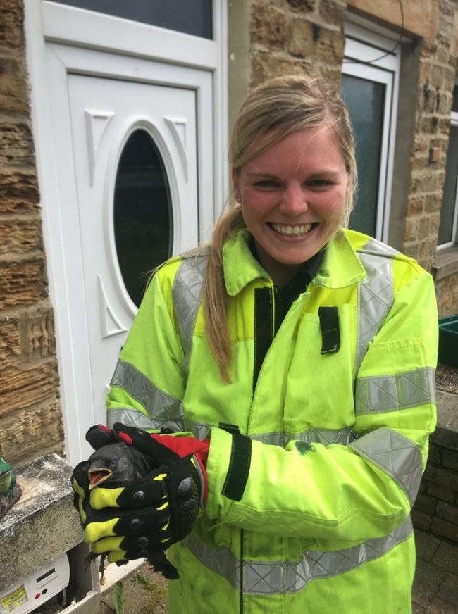 Apprentice firefighter Lindsay Glendinning helped to rescue the blackbird from a chimney in Toronto, near Bishop Auckland
