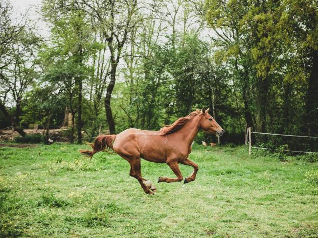 File photo of a horse Picture: Pixabay.com